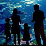 Two Great Aquariums You Need to Visit